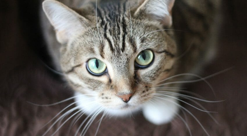 Lessons From a $30,000 Cat Scratch