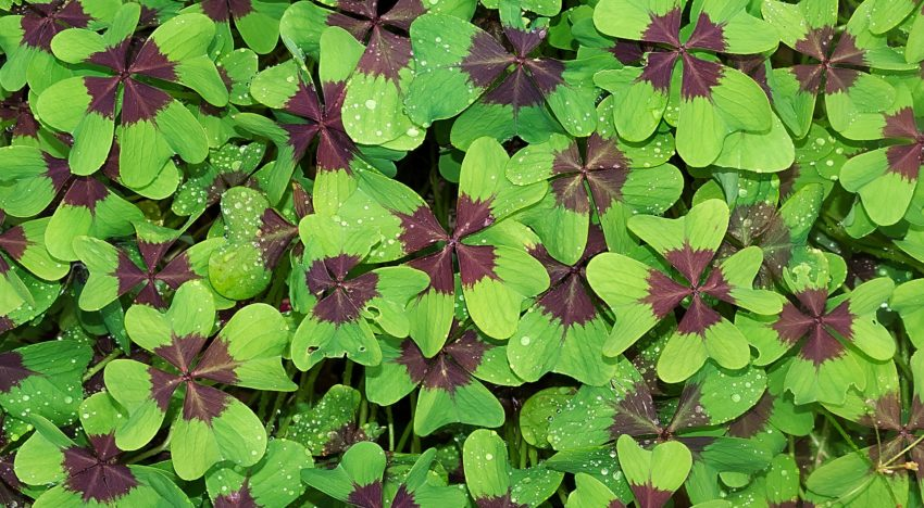 Do You Need Luck to Reach Financial Independence and Retire Early?